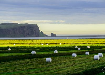 Green and yellow field with cliffs in the background