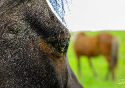 Close up of a black horse eye with a brown horse in the background