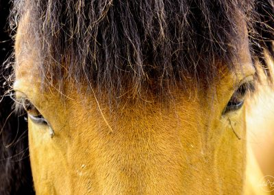 Forehead of a brown horse with black mane