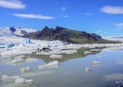 Field of iceberg at daytime