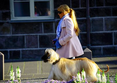 A women walking in the street with her dog, both elegant with long golden hairs