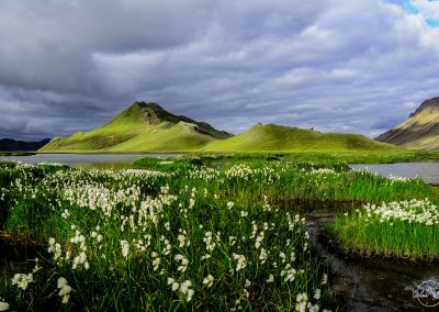 Series of green mountains with white flowers on the foreground