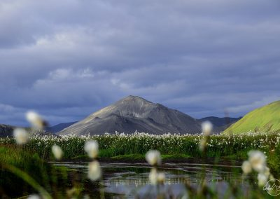 Small mountain on the back; white flowers in the front, stormy sky
