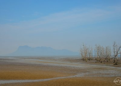 Sea at low tide with trees in the sand and island in the background