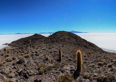 Panoramic view on an island full of cactus and facing white salt desert