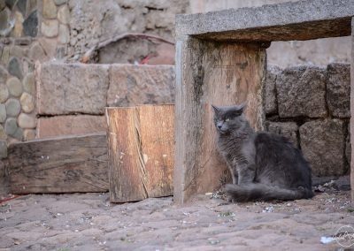 Grey cat with long hair and green eyes is standing in the street below a bench in wood and stone