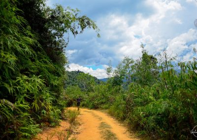 earth trail surrounded by green trees and blue sky