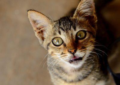 Kitten asking for food