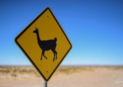 Yellow sign with a lama