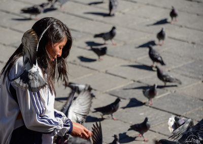 Lady giving food to pigeons with one pigeon on her shoulder