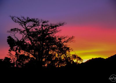 Violet, pink and yellow sky during sunset with a tree in the foreground