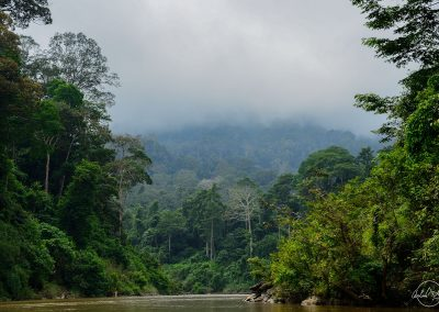 River surrounded by the jungle