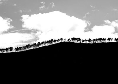 Black and white picture of the silhouette of a line of trees on top of a hill across the whole line
