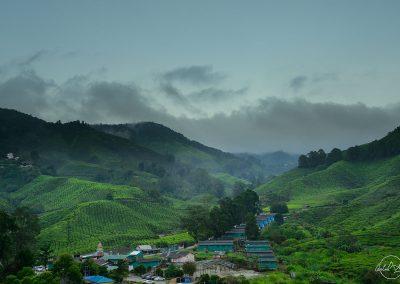 Tea plantations with dark clouds