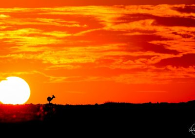Shadow of an antelope facing a huge sun at sunrise in Kenya with an orange and red sky