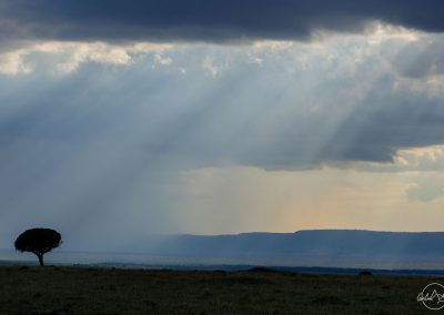 Ray of light through a stormy grey sky landscape with a tree on the left side of the horizon