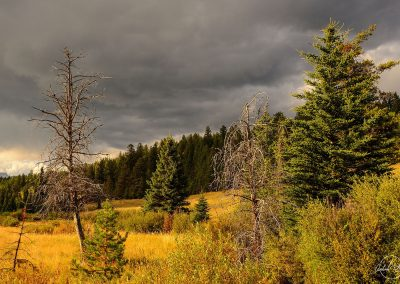 Trees and yellow field under grey stormy sky