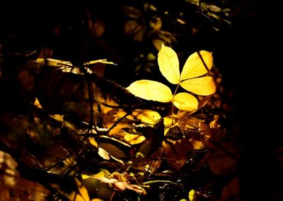 Yellow plant on the ground in a dark forest highlighted from the sun, almost like from a spotlight