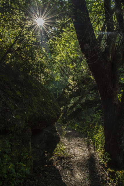 Path in the forest with sunstar effect between branches