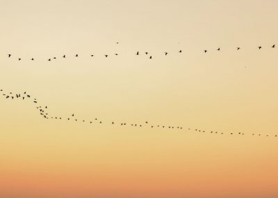 Group of birds flying in a red and orange sky