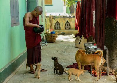 Monk giving food to dogs