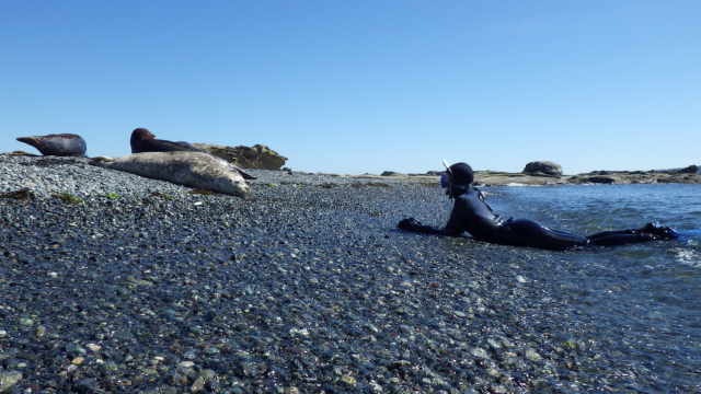 Girl in diving suit lying on the shore in front of seals on Snake Island