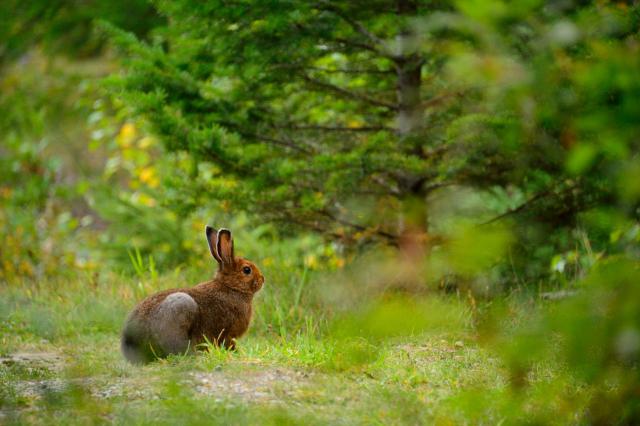 Portrait of a wild rabbit in green lush