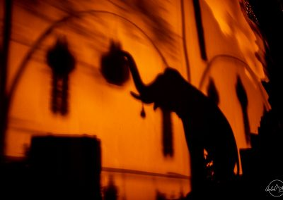 Shadow of an elephant on a wall at night