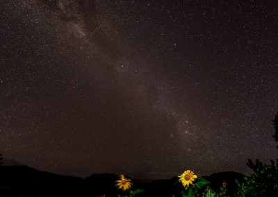 Night sky with milky way with several sunflowers in the foreground