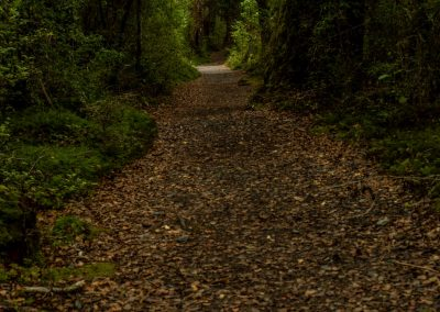 Cylinder-shaped path in a forest covered by leaves on the ground and surrounded by heavy vegatation with low light