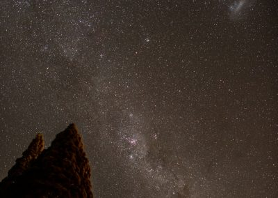 Milky way above the silhouette of a high tree