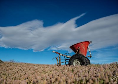 Red barrow in a yellow field with blue sky in background