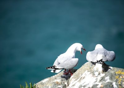 Two seagulls sitting next to each other from the back and one yelling at the other one, blue sea in the background