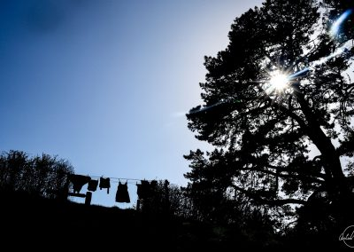 Silhouettes of laundry hung in a garden with sunrays going through a tree on the right side