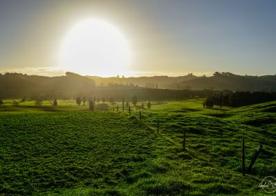 Sun setting above a field of green grass with small hills in the background