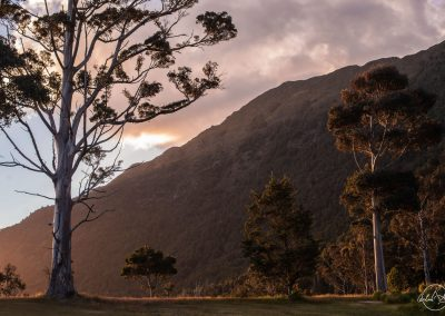 Tall thin tree on the left with mountain in the background in a soft light