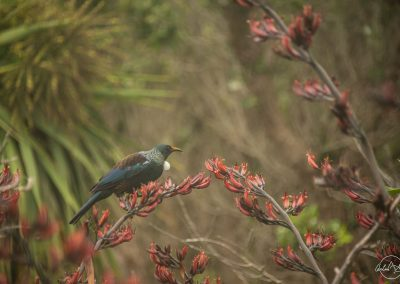 Green and brown bird with a white collar on a thin tree surrounded by red flowers